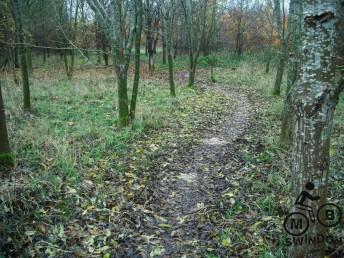 Before raking leaves off trail.