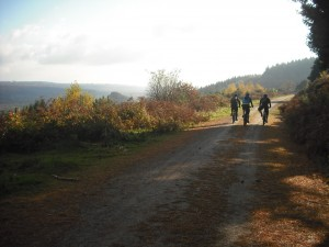 Autumnal view of 3 riders on a track in the Forest of Dean.
