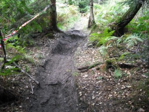 Roots on mountain bike track.