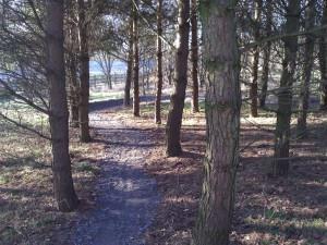 Trail through trees.