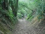 Mountain bike rider son steep track.