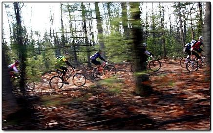 Bikes riding through forest.