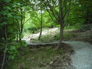 Some new trail in 2010.