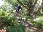 Riding down a hill in the Forest of Dean.