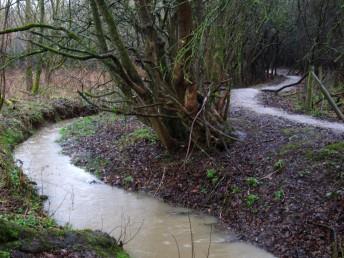 Mountain bike trail next to stream.