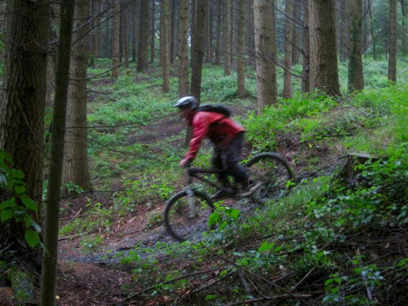 Download this Ride Report Tom Wet Woodland Wonder Forest Dean picture