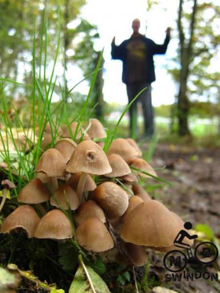 Mushrooms at a mountain bike trail.